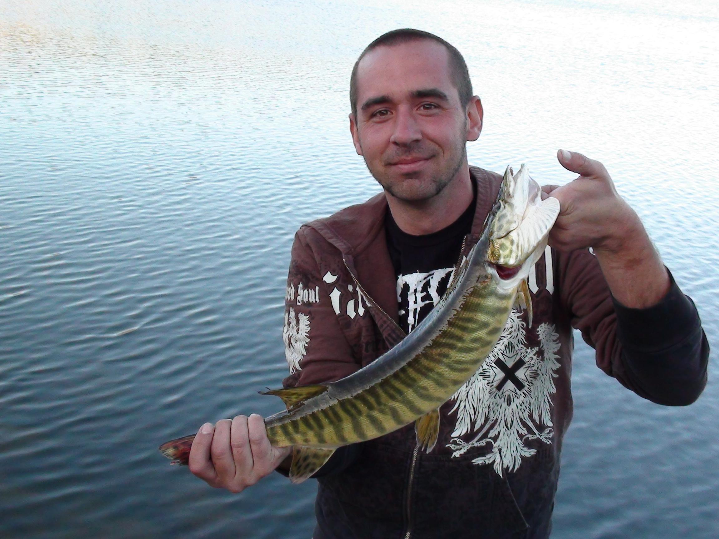 Tiger Muskie | backcountryfishnerd Baby Muskie Fish